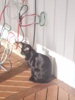 Bartje geniet van de zon