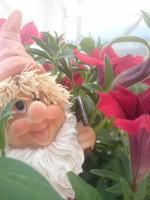 kabouters en bloemen