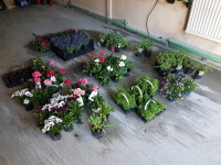 mooie maar dure bloemen